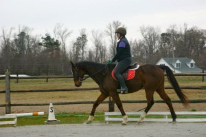 Dressage Queen
