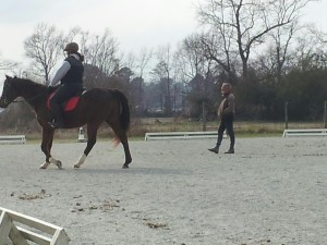 dressage with Verne